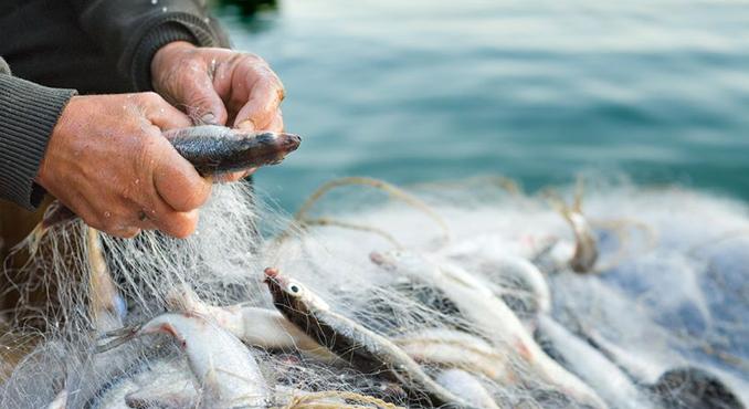 brianza pesce fresco